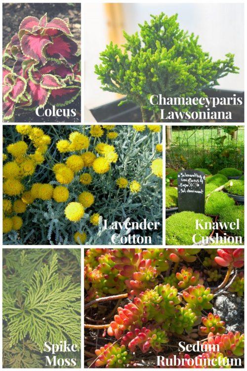 Fairy garden plants e1515349466677